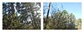 River Road, Big Sandy, Texas.  180° Diptych.  Keystone XL Pipeline construction corridor.  Google Street View 2013.